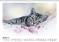Schmusige Britisch Kurzhaar (Wandkalender 2019 DIN A3 quer) - Produktdetailbild 1