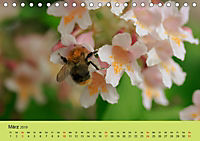 Schnecke, Käfer und Co (Tischkalender 2019 DIN A5 quer) - Produktdetailbild 3