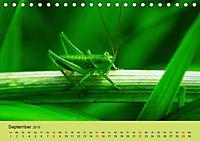Schnecke, Käfer und Co (Tischkalender 2019 DIN A5 quer) - Produktdetailbild 9