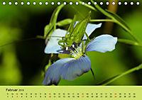 Schnecke, Käfer und Co (Tischkalender 2019 DIN A5 quer) - Produktdetailbild 2