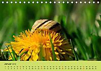 Schnecke, Käfer und Co (Tischkalender 2019 DIN A5 quer) - Produktdetailbild 1