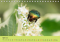 Schnecke, Käfer und Co (Tischkalender 2019 DIN A5 quer) - Produktdetailbild 4