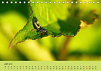 Schnecke, Käfer und Co (Tischkalender 2019 DIN A5 quer) - Produktdetailbild 7