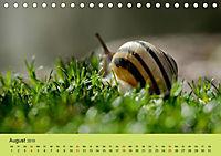 Schnecke, Käfer und Co (Tischkalender 2019 DIN A5 quer) - Produktdetailbild 8