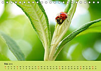 Schnecke, Käfer und Co (Tischkalender 2019 DIN A5 quer) - Produktdetailbild 5