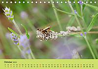 Schnecke, Käfer und Co (Tischkalender 2019 DIN A5 quer) - Produktdetailbild 10