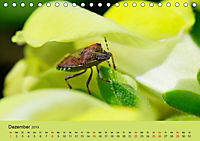 Schnecke, Käfer und Co (Tischkalender 2019 DIN A5 quer) - Produktdetailbild 12