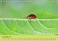 Schnecke, Käfer und Co (Tischkalender 2019 DIN A5 quer) - Produktdetailbild 11