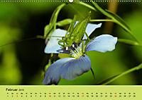 Schnecke, Käfer und Co (Wandkalender 2019 DIN A2 quer) - Produktdetailbild 2
