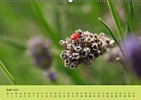 Schnecke, Käfer und Co (Wandkalender 2019 DIN A2 quer) - Produktdetailbild 6