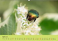Schnecke, Käfer und Co (Wandkalender 2019 DIN A2 quer) - Produktdetailbild 4