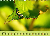 Schnecke, Käfer und Co (Wandkalender 2019 DIN A2 quer) - Produktdetailbild 7
