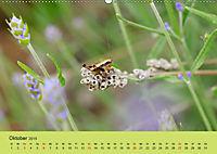 Schnecke, Käfer und Co (Wandkalender 2019 DIN A2 quer) - Produktdetailbild 10