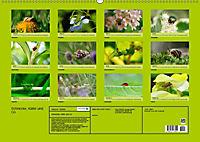 Schnecke, Käfer und Co (Wandkalender 2019 DIN A2 quer) - Produktdetailbild 13