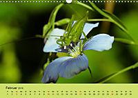 Schnecke, Käfer und Co (Wandkalender 2019 DIN A3 quer) - Produktdetailbild 2