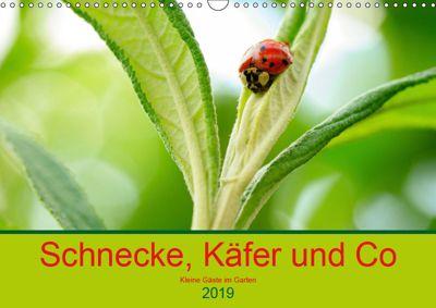Schnecke, Käfer und Co (Wandkalender 2019 DIN A3 quer), Ilse Kunz