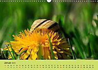 Schnecke, Käfer und Co (Wandkalender 2019 DIN A3 quer) - Produktdetailbild 1