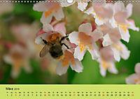 Schnecke, Käfer und Co (Wandkalender 2019 DIN A3 quer) - Produktdetailbild 3