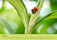 Schnecke, Käfer und Co (Wandkalender 2019 DIN A3 quer) - Produktdetailbild 5