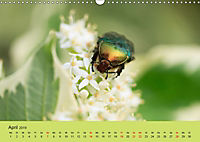 Schnecke, Käfer und Co (Wandkalender 2019 DIN A3 quer) - Produktdetailbild 4