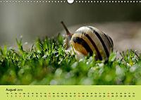 Schnecke, Käfer und Co (Wandkalender 2019 DIN A3 quer) - Produktdetailbild 8