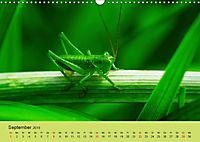 Schnecke, Käfer und Co (Wandkalender 2019 DIN A3 quer) - Produktdetailbild 9