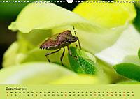 Schnecke, Käfer und Co (Wandkalender 2019 DIN A3 quer) - Produktdetailbild 12
