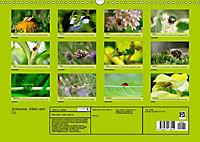 Schnecke, Käfer und Co (Wandkalender 2019 DIN A3 quer) - Produktdetailbild 13