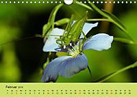 Schnecke, Käfer und Co (Wandkalender 2019 DIN A4 quer) - Produktdetailbild 2