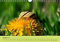 Schnecke, Käfer und Co (Wandkalender 2019 DIN A4 quer) - Produktdetailbild 1