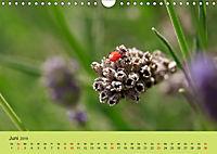 Schnecke, Käfer und Co (Wandkalender 2019 DIN A4 quer) - Produktdetailbild 6