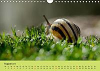 Schnecke, Käfer und Co (Wandkalender 2019 DIN A4 quer) - Produktdetailbild 8