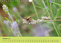 Schnecke, Käfer und Co (Wandkalender 2019 DIN A4 quer) - Produktdetailbild 10