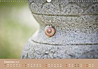 Schnecken Allerlei (Wandkalender 2019 DIN A3 quer) - Produktdetailbild 12