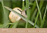 Schnecken Allerlei (Wandkalender 2019 DIN A3 quer) - Produktdetailbild 2
