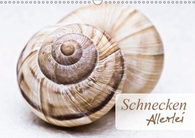 Schnecken Allerlei (Wandkalender 2019 DIN A3 quer), Stela-Photoart