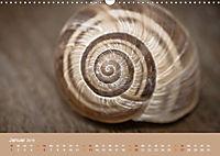 Schnecken Allerlei (Wandkalender 2019 DIN A3 quer) - Produktdetailbild 1
