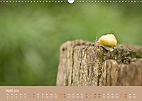 Schnecken Allerlei (Wandkalender 2019 DIN A3 quer) - Produktdetailbild 4