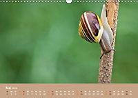 Schnecken Allerlei (Wandkalender 2019 DIN A3 quer) - Produktdetailbild 5