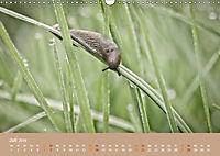 Schnecken Allerlei (Wandkalender 2019 DIN A3 quer) - Produktdetailbild 7