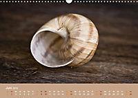 Schnecken Allerlei (Wandkalender 2019 DIN A3 quer) - Produktdetailbild 6