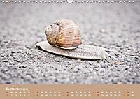 Schnecken Allerlei (Wandkalender 2019 DIN A3 quer) - Produktdetailbild 9