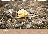 Schnecken Allerlei (Wandkalender 2019 DIN A3 quer) - Produktdetailbild 10