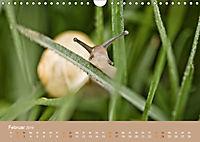 Schnecken Allerlei (Wandkalender 2019 DIN A4 quer) - Produktdetailbild 2