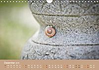 Schnecken Allerlei (Wandkalender 2019 DIN A4 quer) - Produktdetailbild 12