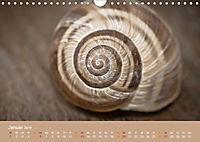 Schnecken Allerlei (Wandkalender 2019 DIN A4 quer) - Produktdetailbild 1