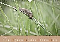 Schnecken Allerlei (Wandkalender 2019 DIN A4 quer) - Produktdetailbild 7