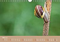 Schnecken Allerlei (Wandkalender 2019 DIN A4 quer) - Produktdetailbild 5