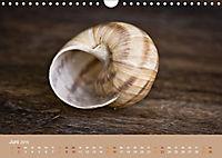 Schnecken Allerlei (Wandkalender 2019 DIN A4 quer) - Produktdetailbild 6