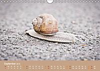 Schnecken Allerlei (Wandkalender 2019 DIN A4 quer) - Produktdetailbild 9